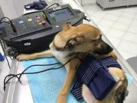 Magnetfeldtherapie für Hunde, Pferde und Katzen